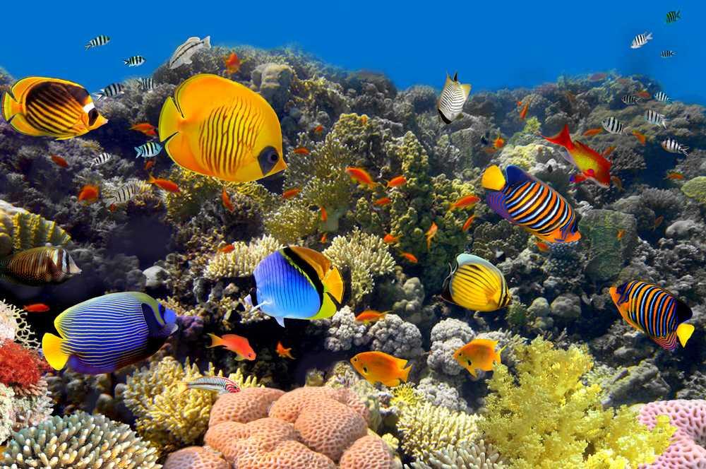 Under the Sea Weekend