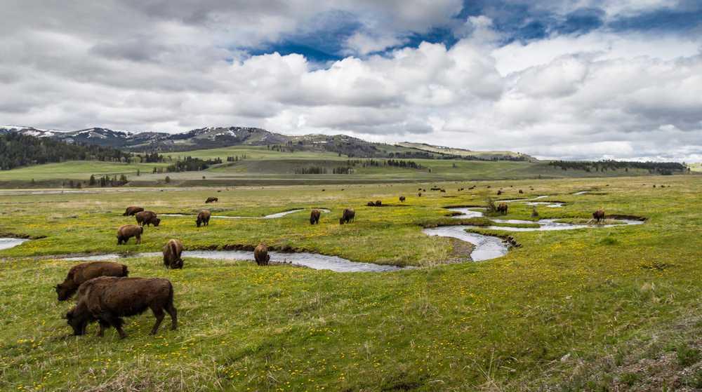 Yellowstone NP Full Opening