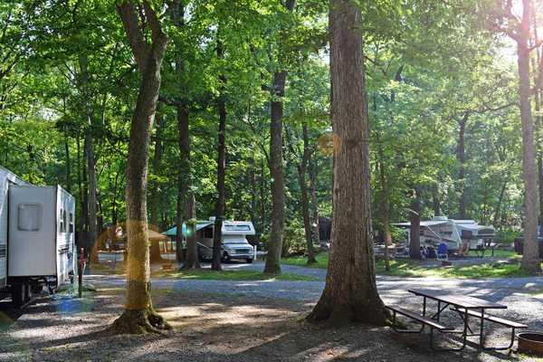 Woodland Premium Pull-Thru RV Site