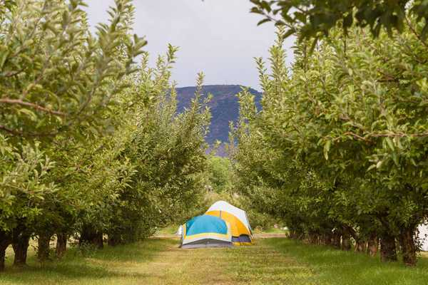 Ciderfest Orchard Camping - tents only
