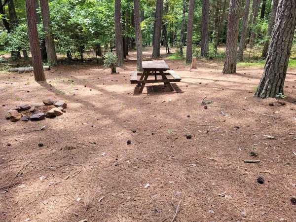Medium Primitive Tent Site (up to 10 people)