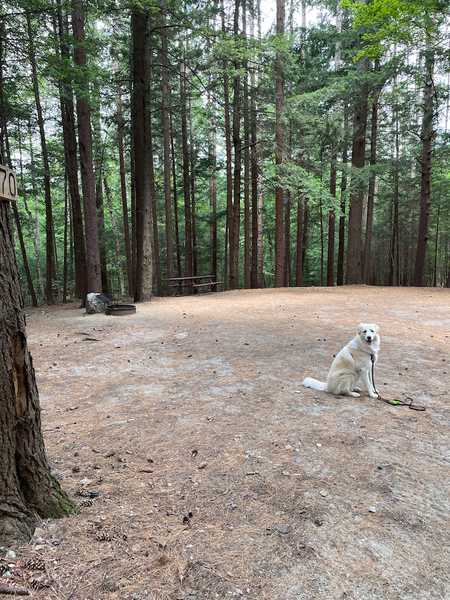 Wooded Tent Site