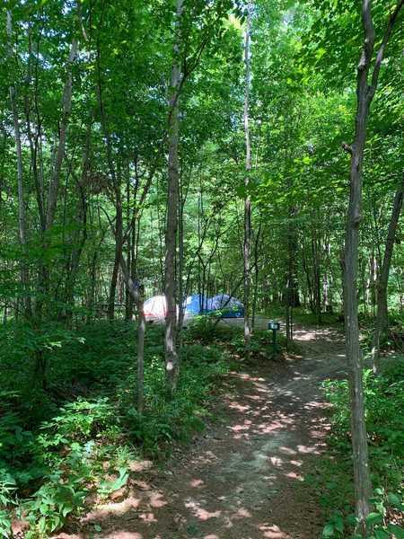 Basic Tent Walk Up Site (8 Max)