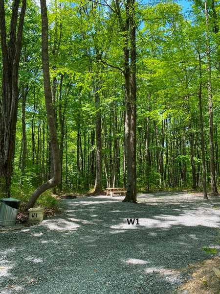 Wooded Primitive Site