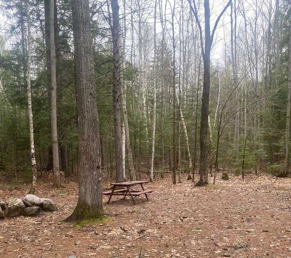 Wilderness Wooded Tent Site